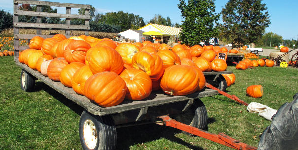 Giant Pumpkins.JPG - Google Chrome_2012-09-11_13-48-48