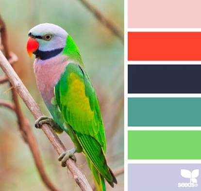 Design Seeds® for all who ❤ color feathered hues - Google Chrome_2014-05-29_10-10-25