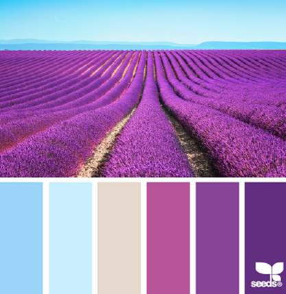 Design Seeds® for all who ❤ color lavender brights - Google Chrome_2014-05-02_12-16-22