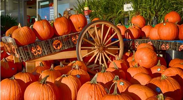 Free Photo Pumpkins, Wagon, Halloween, Outside - Free Image on Pixabay - 202133_2014-09-29_12-33-57