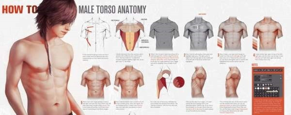 HOW TO Male Torso Anatomy by tincek-marincek on deviantART - Google Chrome-000189