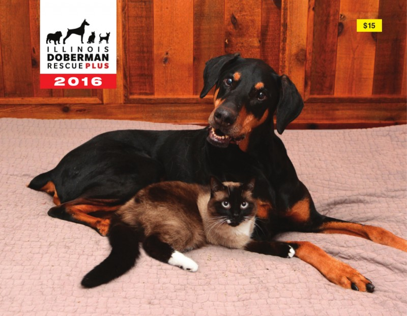 dobermanrescue-calendar