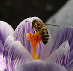 Four Clever Spring Marketing Ideas