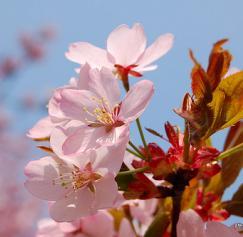 3 Spring Self-Promotion Ideas