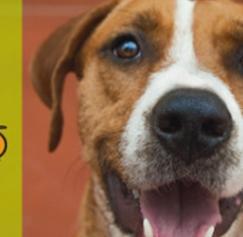 Hot Off the Press: East Bay SPCA, Crocker Art Museum and More