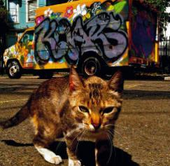 Customer Appreciation – Hoodcats