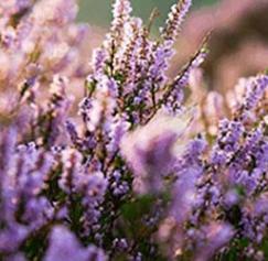 Spring Color Palettes